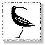 :: Native Shore Fiction's Mascot: The Rare Curlew ::